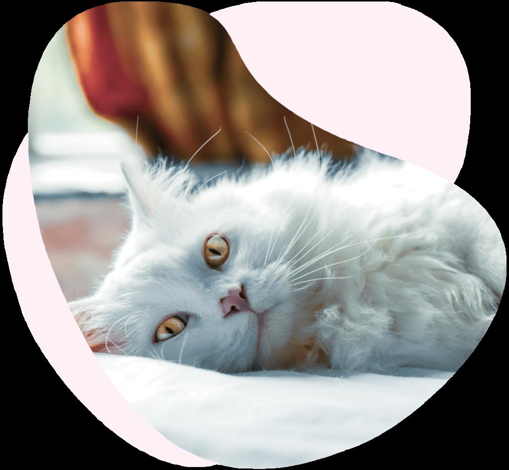 garantie décès chien chat