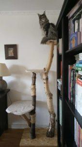arbre à chat, tronc d'arbre boulot
