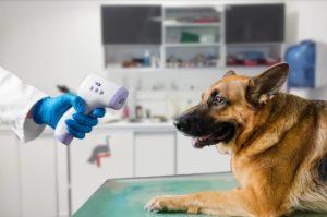 température chien