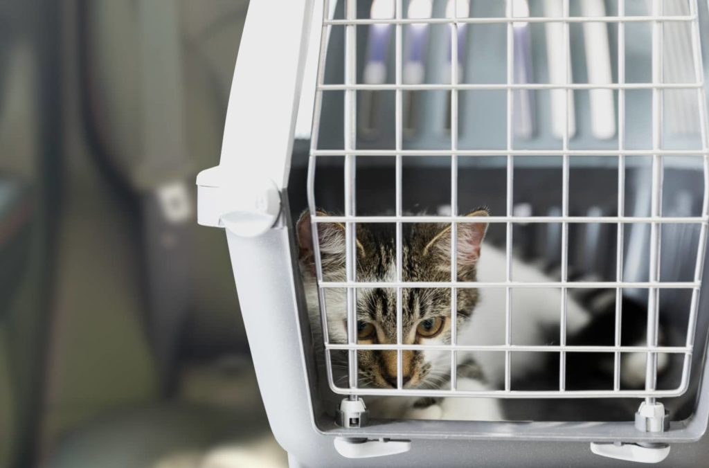 chat cage voiture