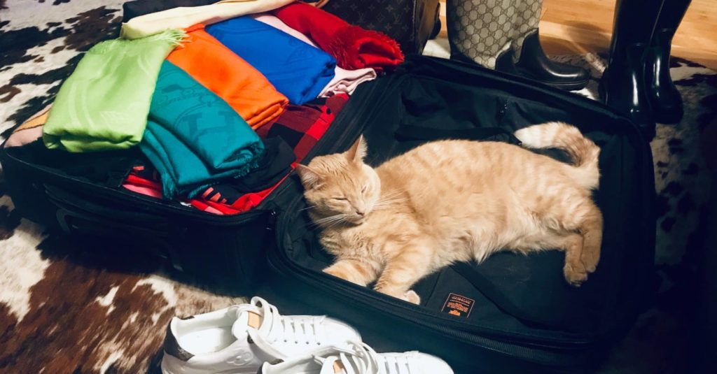 chat valise