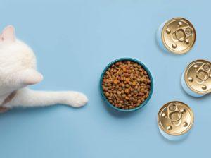 quelle alimentation chaton