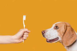 brossage dent chien