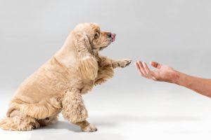chien facile éduquer