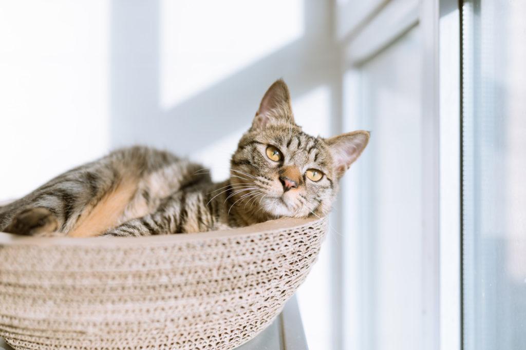 alimentation chat intérieur