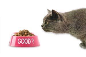 alimention équilibrée chat