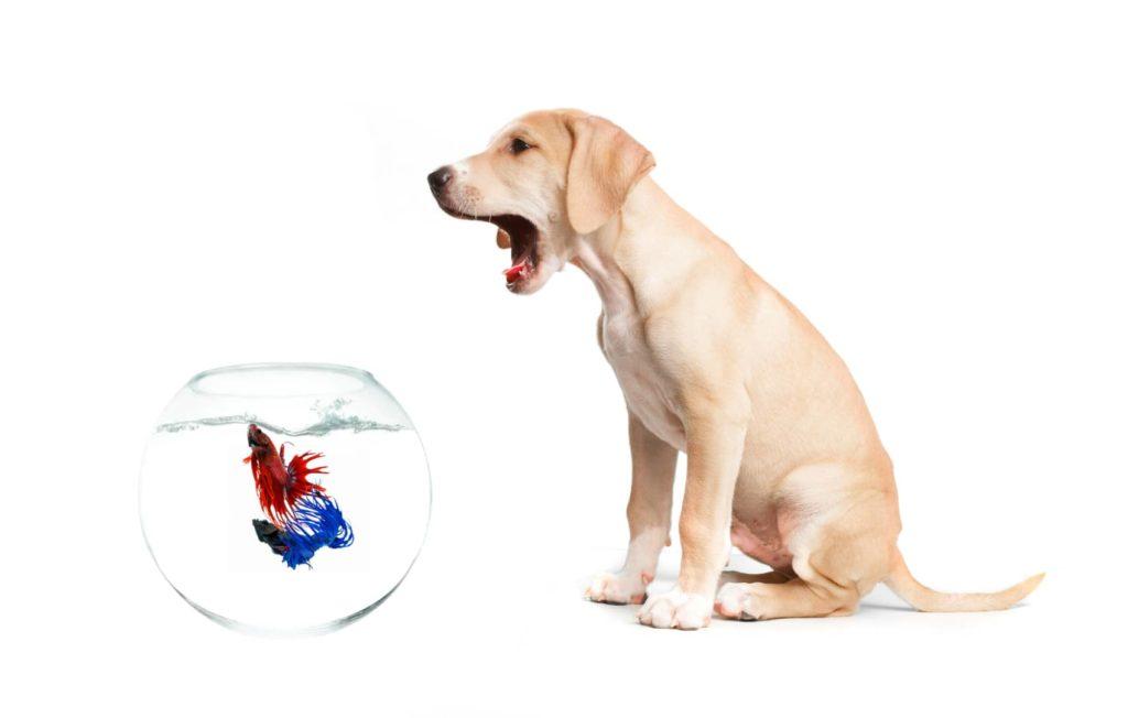 intoxication poisson chien