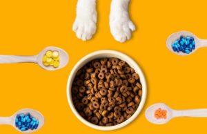 aliments thérapeutiques chat
