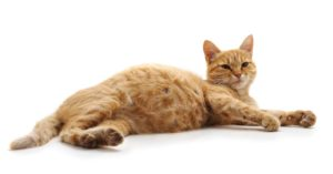 chat gestation