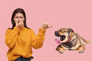 mauvaise haleine chien